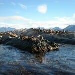 Isla de los Lobos. Ushuaia