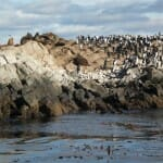 Leones marinos y cormoranes