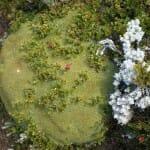 Vegetación rastrera