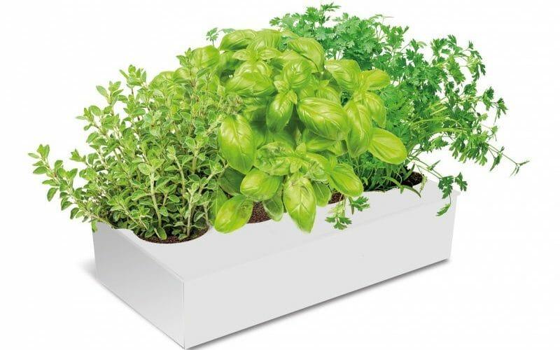 Spicebox cultiva tus propias hierbas arom ticas el for Plantas aromaticas para cocinar
